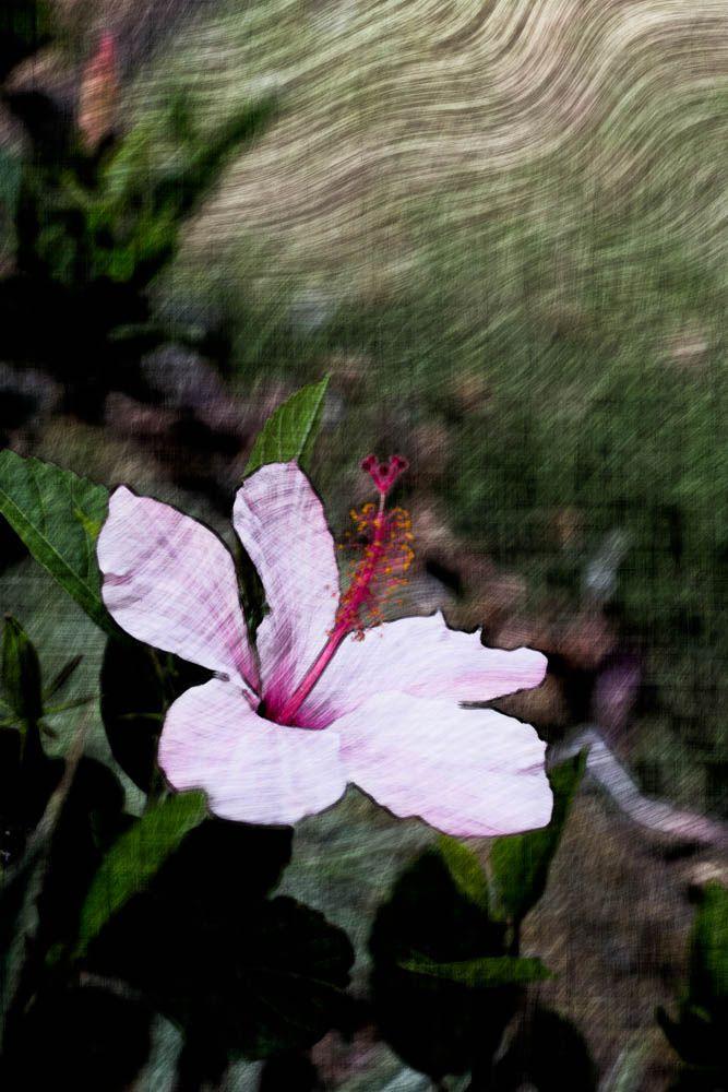 https://flic.kr/p/dMrwvB | Flower Of Hope |