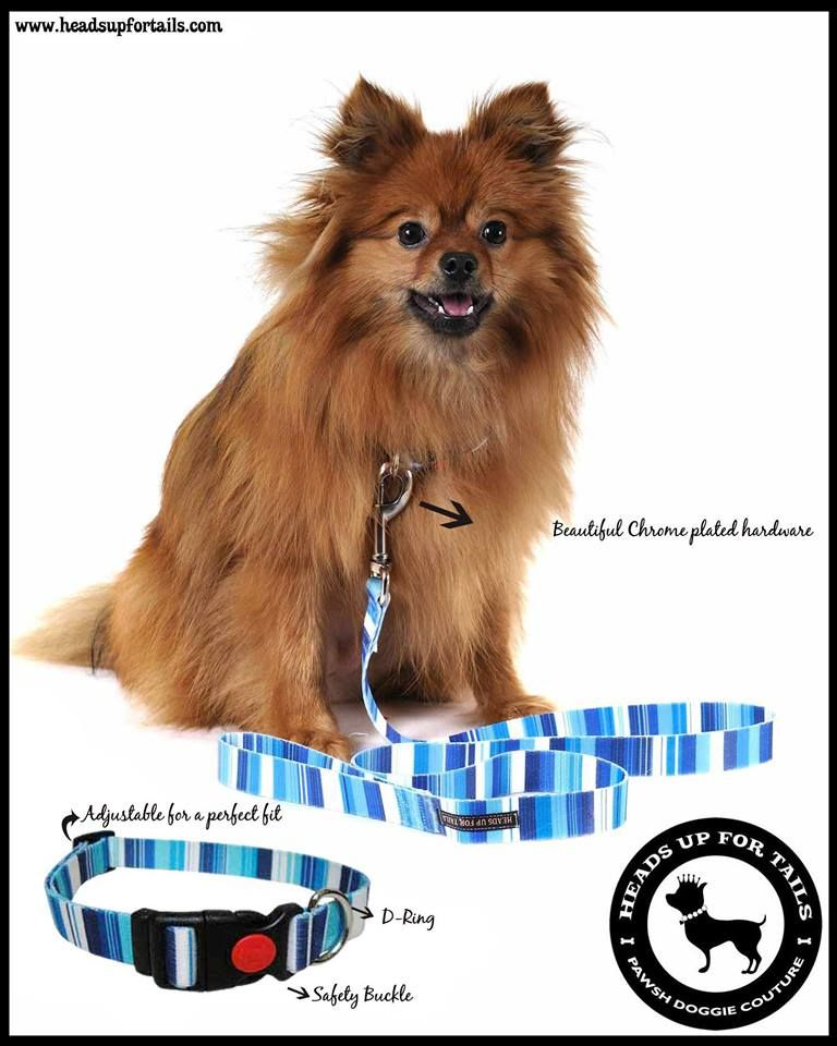 Check Out Our New Leashes And Collars With A Safety Buckle Online Pet Supplies Pet Supply Stores Pets