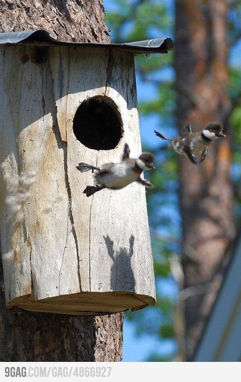 Birds can fly.