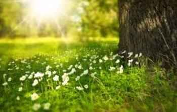 short essay on beauty of nature nature is a god gift to this world short essay on beauty of nature nature is a god gift to this world