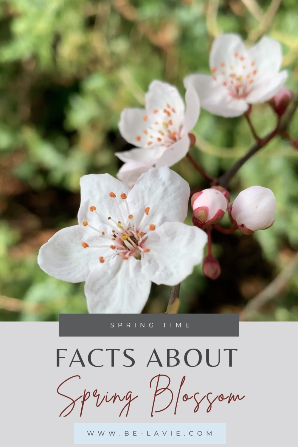 Blossom Facts From Around The World Video In 2021 Spring Facts Blossom Blossom Flower