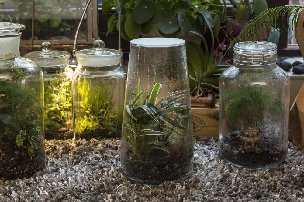 Flaschengarten Kleines Okosystem Im Glas Flaschengarten Pflanzen Garten Pflanzen