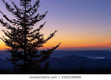 Single Pine Tree Over Blue Ridge Stock Photo Edit Now 1550199806blue