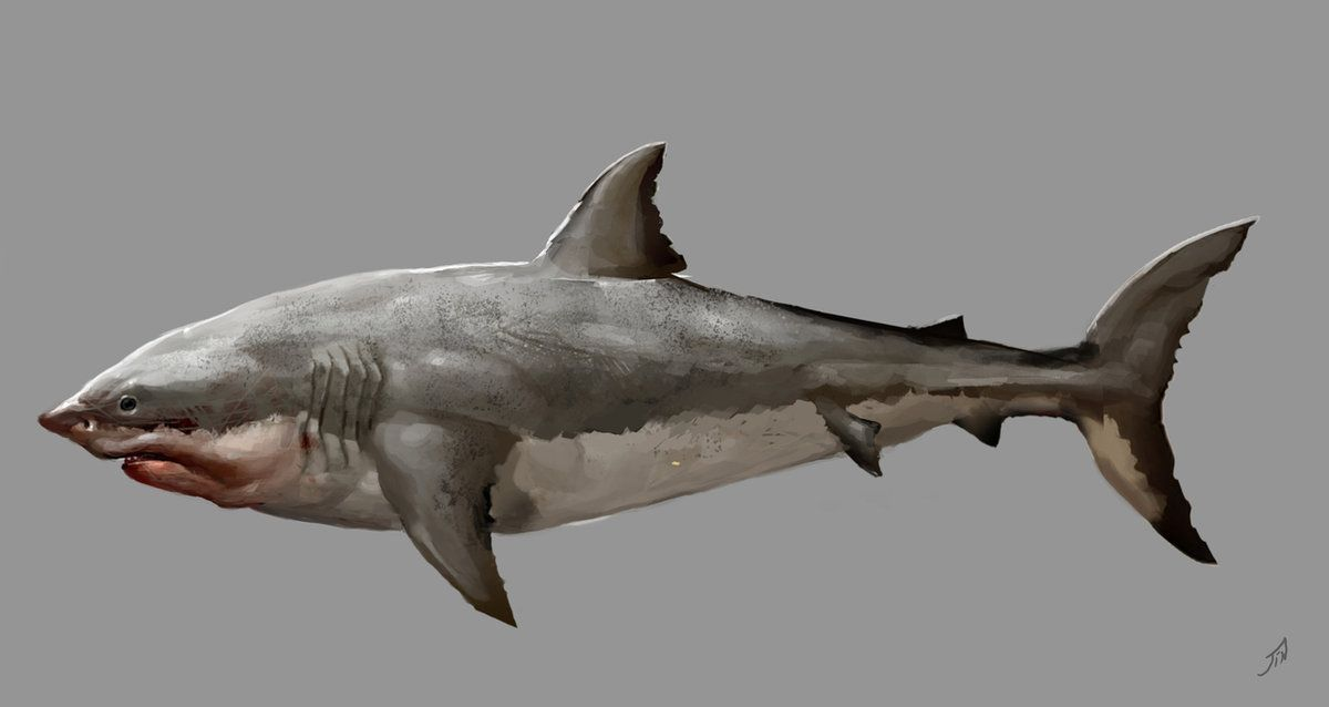A concept art piece for great white sharks in AC4 BF. I'm gonna hunt the crud out of these guys.