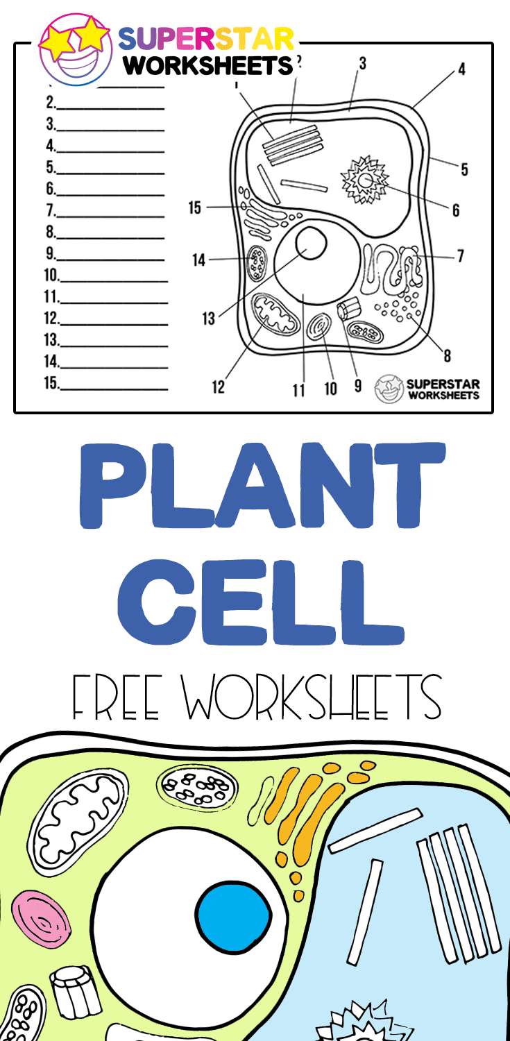 Plant Cell Worksheets Free Plant Cell Worksheets For Students To Identify And Label The Parts Younger Studen In 2020 Plant Cells Worksheet Cells Worksheet Plant Cell [ 1500 x 735 Pixel ]