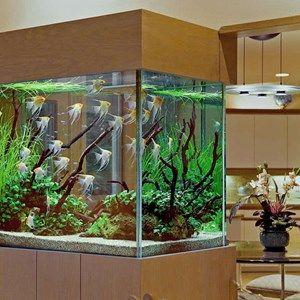 فوائد حوض الأسماك في المنزل Aquarium Marine Aquarium Angel Fish