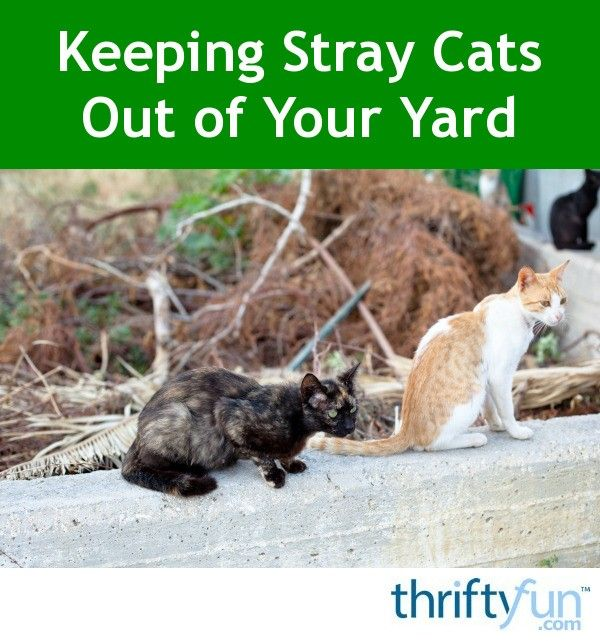 Keeping Stray Cats Out of Your Yard | Cat repellant ...
