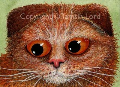 TAMSIN LORD ART ~ Original ACEO Fiendish Feline Cat Kitten : Rudy, Scottish Fold