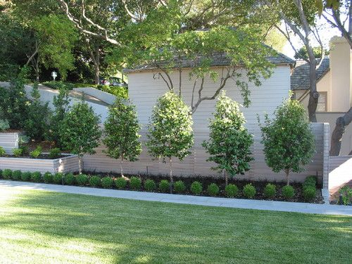 Wonderful Piedmont   Contemporary   Landscape   San Francisco   Randy Thueme Design  Inc. Large Trees And Small Shrubs;