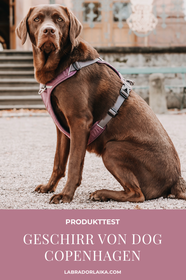 Produkttest Fur Hunde Hundegeschirr Von Dog Copenhagen In 2020 Hundegeschirr Hundeprodukte Hunde
