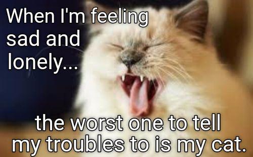 Just stop me if I'm boring you. http://cheezburger.com/9043485184