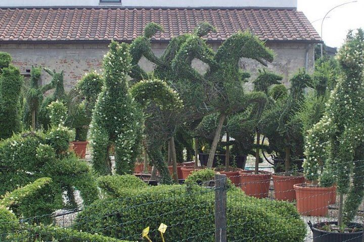 Let's Get Creative with Buxus
