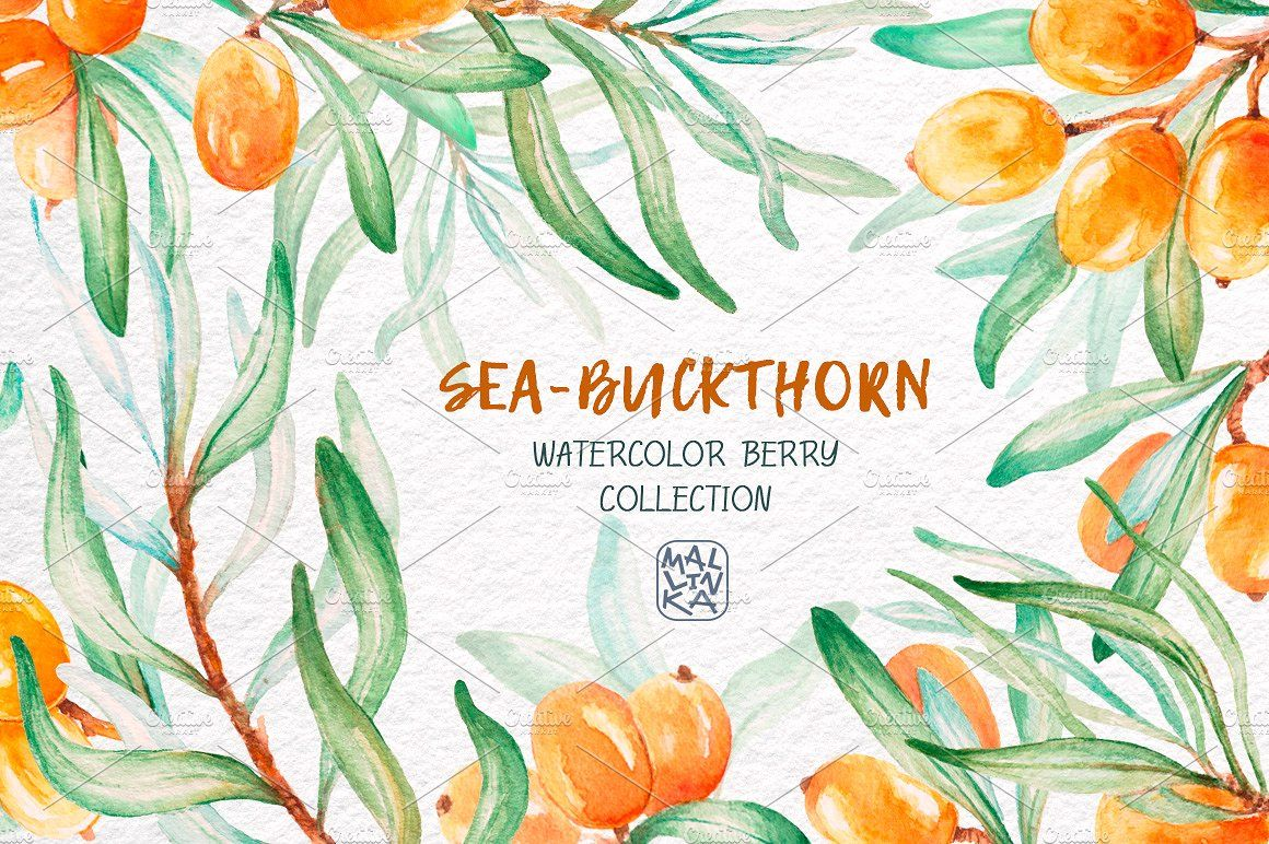 Sea Buckthorn Watercolor Collection Perfect Prints Invitations