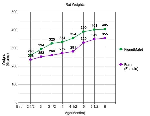Weight Chart For Rats  Rat Health  Meds  First Aid