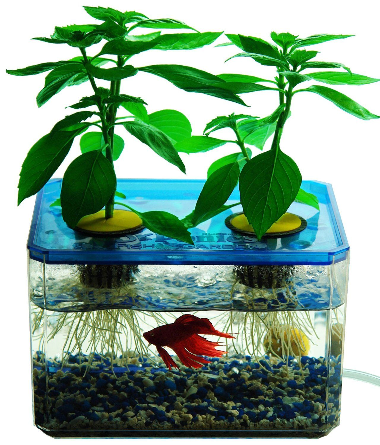 How to diy aquaponics the how to diy guide on building for Fish tank hydroponic garden