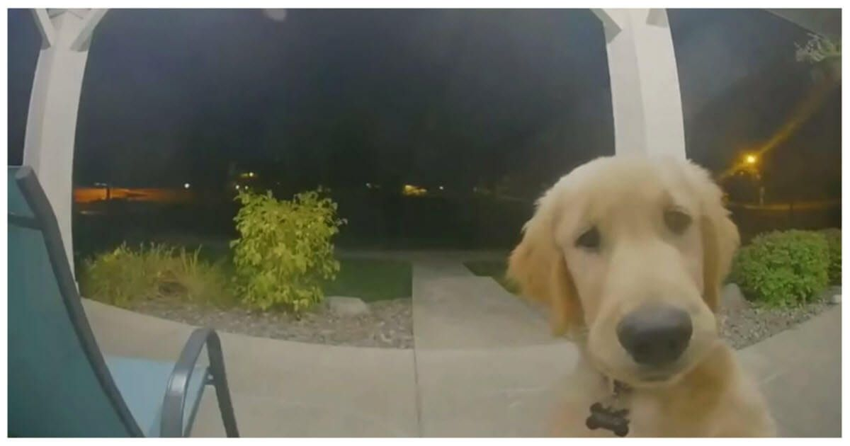 Puppy Instantly Regrets His House Escape Attempt Then Rings
