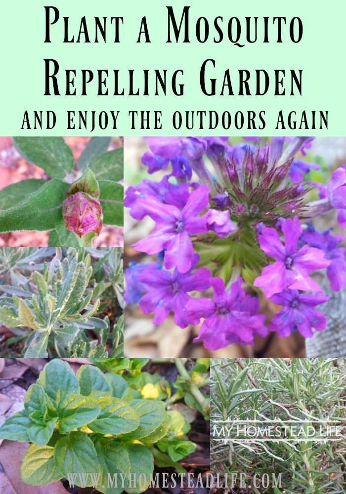 Plant a Mosquito Repelling Garden & Enjoy The Outdoors