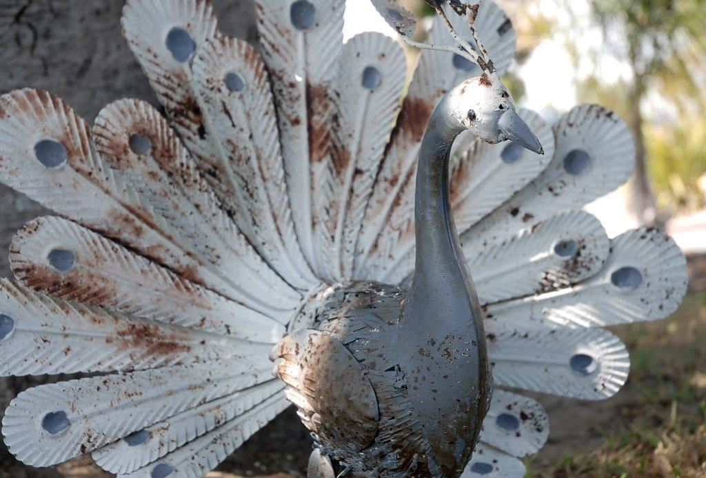 Rusty Metal Peacock Home Decor Sculpture - Save-on-Crafts  $45 - refinish and spray paint white for the wedding.