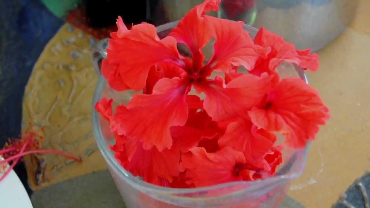 Recipe for hibiscus flower tea thai red roselle hibiscus from recipe for hibiscus flower tea thai red roselle hibiscus from southern exposure seed exchange are izmirmasajfo Choice Image