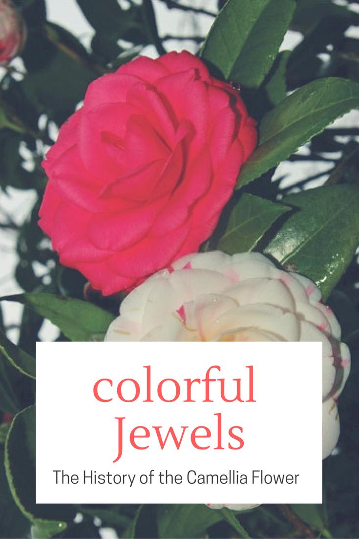 Colorful Jewels Plant Profiles Heirloom Gardener Camellia Flower Heirlooms Flowers Flowers