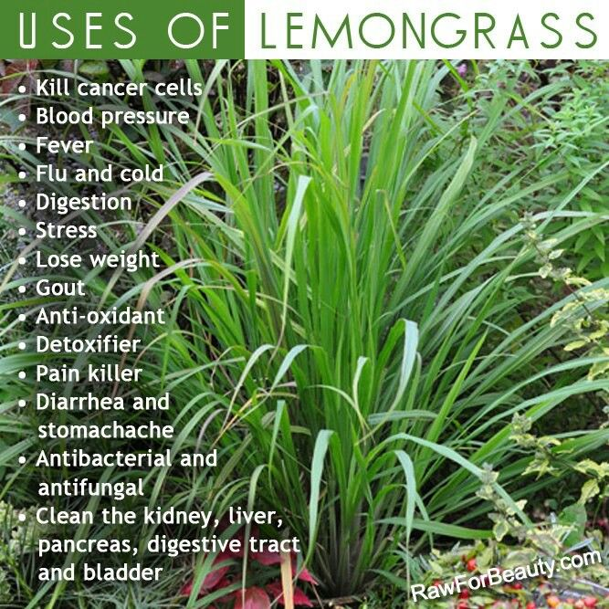 Uses of Lemon Grass; one benefit can be weight loss! Visit www ...