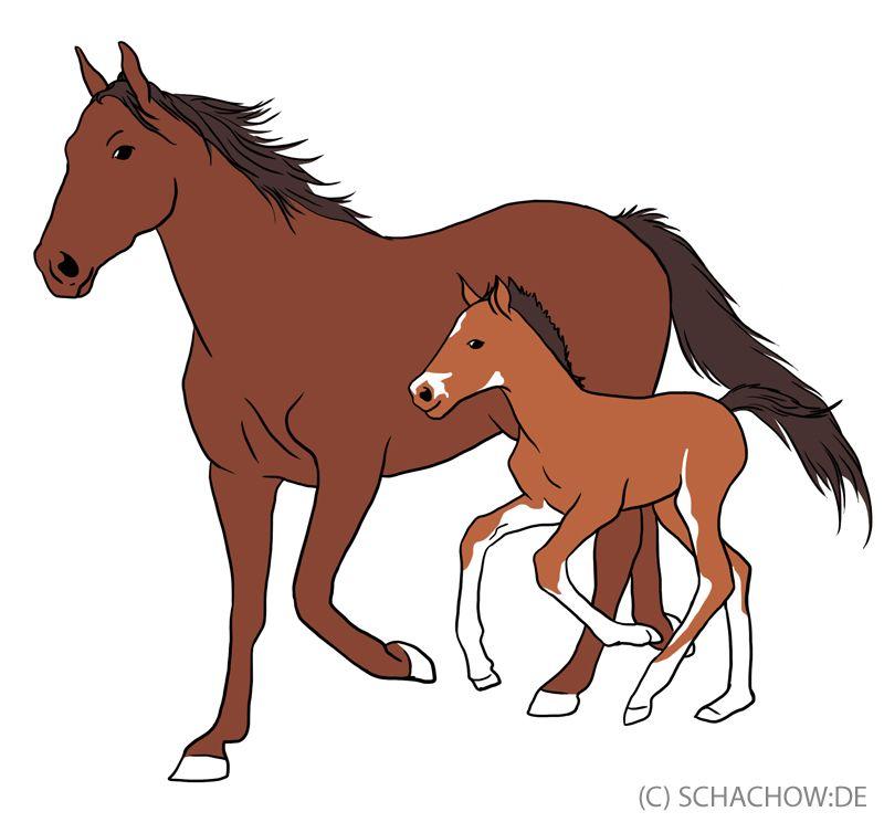 pferde  tierbilder tiere zeichnungen