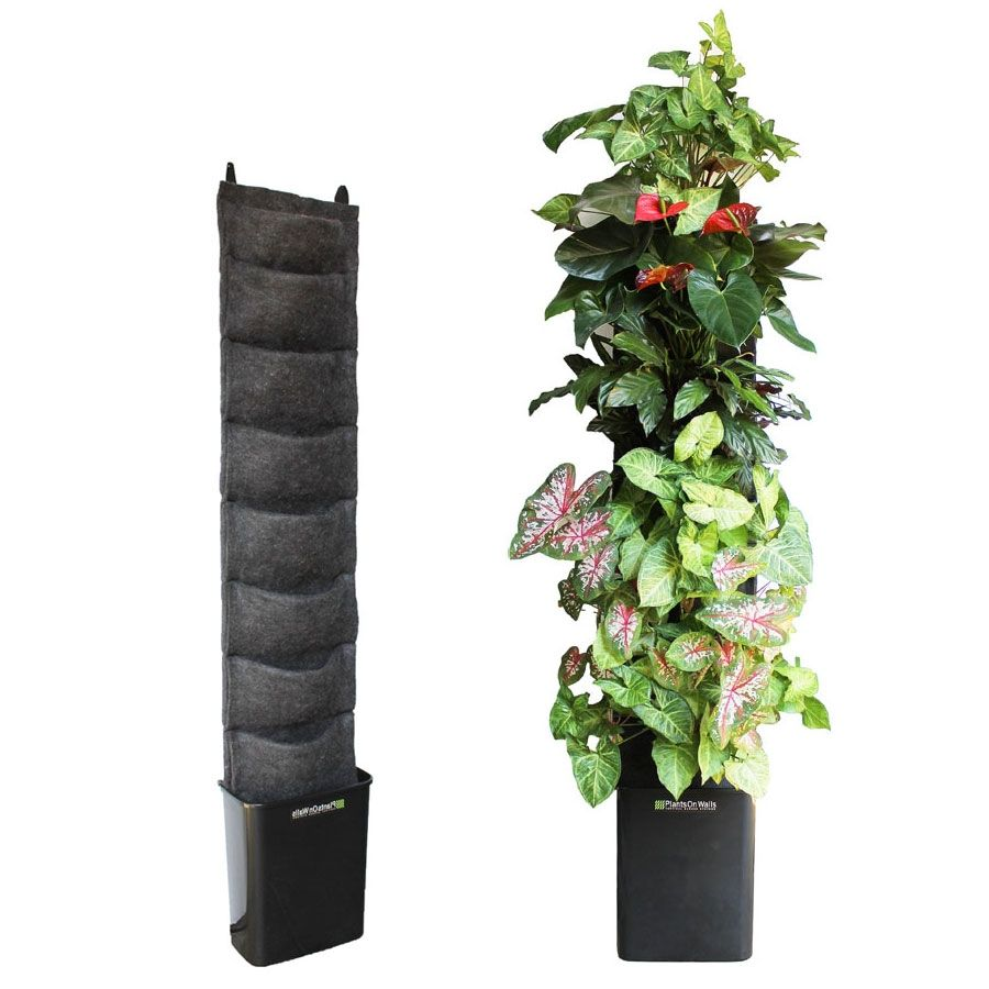 Hydroponic Kitchen Herb Garden Plants On Walls Vertical Gardening I Would Use This For An