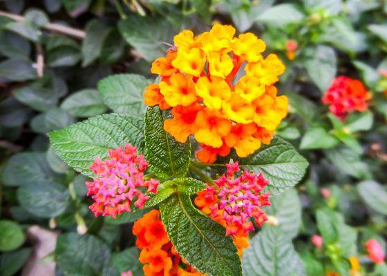 Outdoor Living Ideas The Home Depot Florida Plants Perennials Butterfly Garden