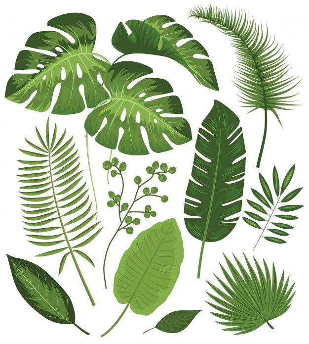 Coleção de folhas tropicais | Embroidery