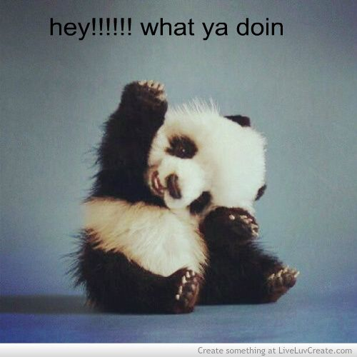 cute quotes about pandas