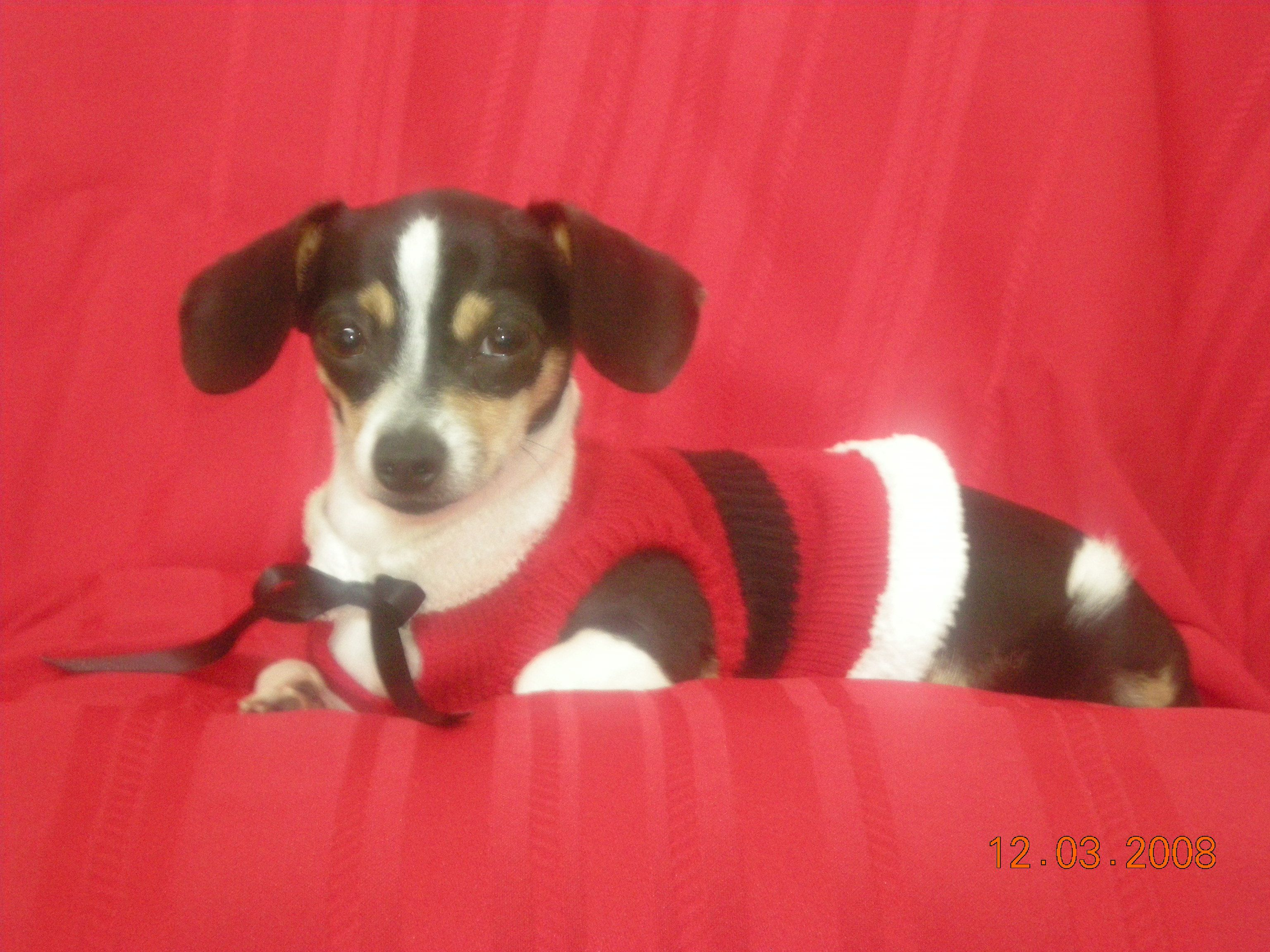 Lupita's (Lulu) Christmas Photo