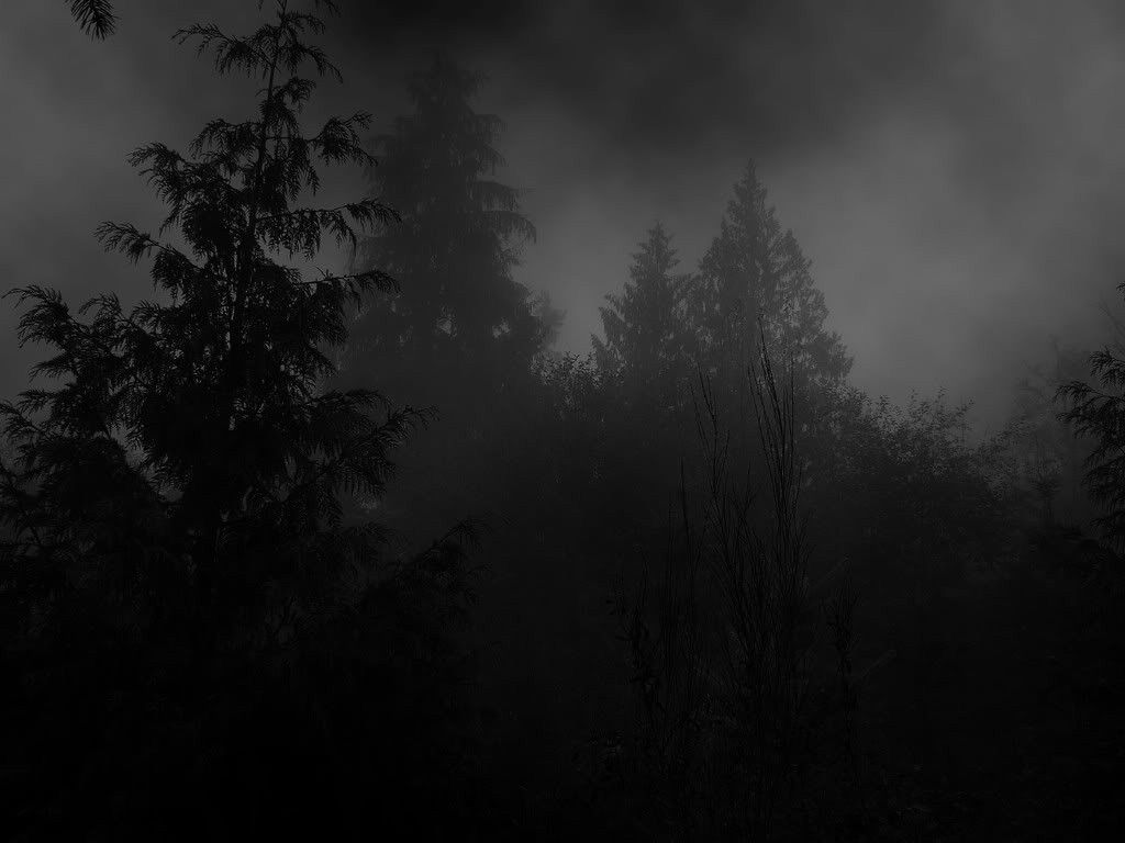 Dark woods picture hd dark woods picture dark woods pictures hd - Dark Wood Scary Unhallowed Misty Tricky Woods Forest Wallpapers In Hd