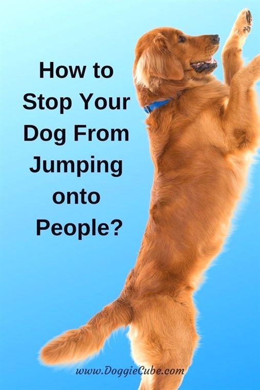 Dog Training Mn Dog Training Metal Collar Dog Training