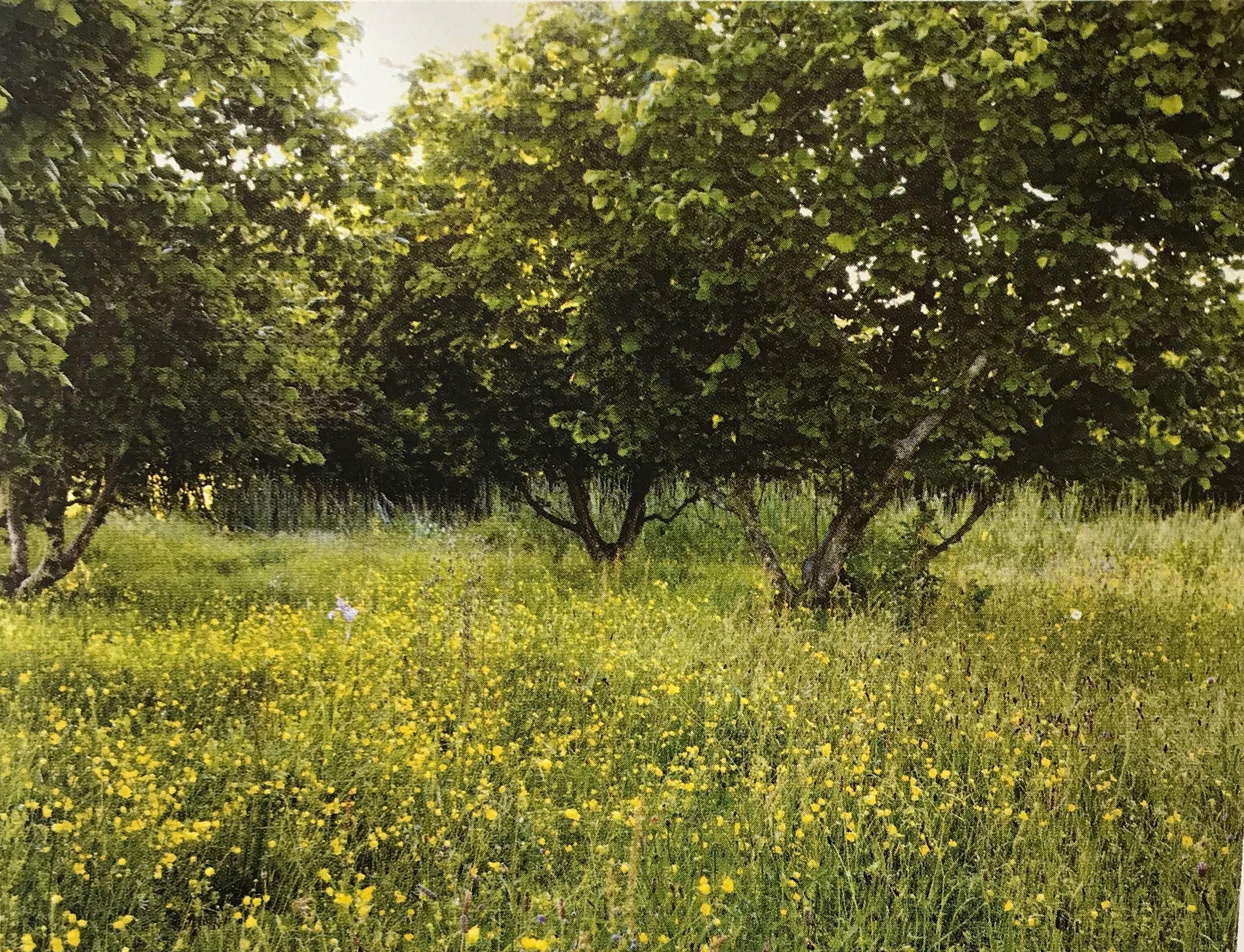 Jinny Blom - hazelnuts | Contemporary Kitchen Garden | Pinterest ...