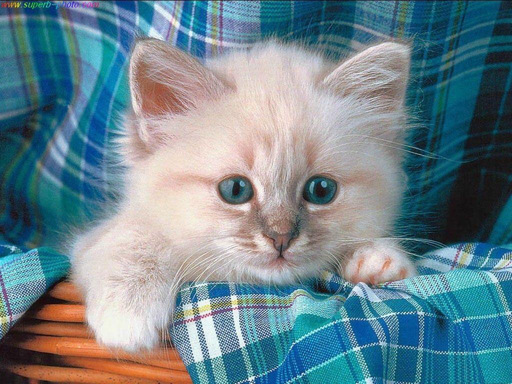 صور قطط صور قطط حلوة صور اجمل قطط 2014 Photos Cats 2014 Kittens Cutest Cute Fluffy Kittens Fluffy Animals
