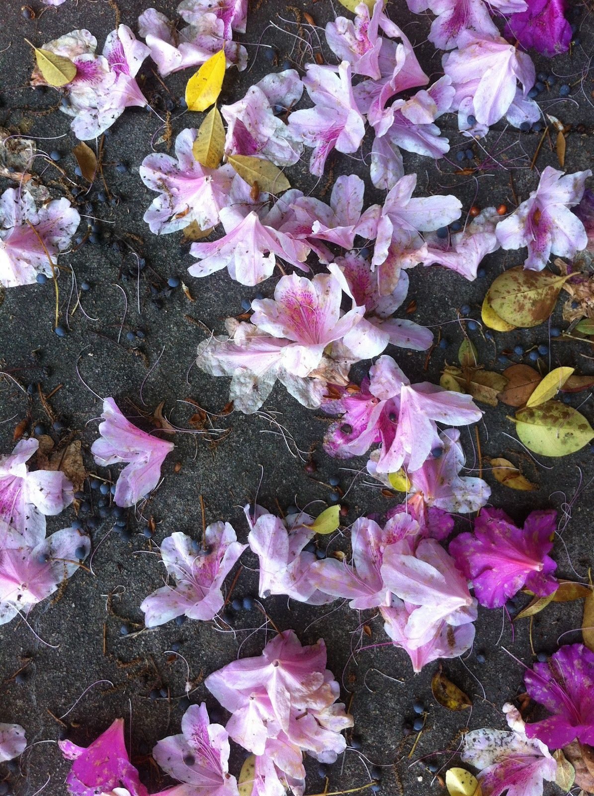 Scattered... flowers, dreams, hopes... reach out... touch it... you are almost there. Charleston, South Carolina May 2012