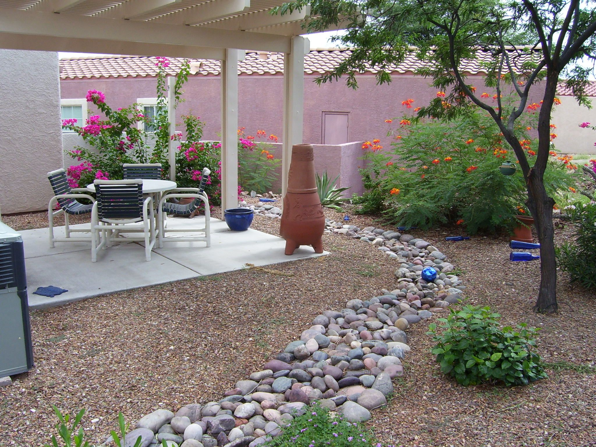 my backyard in sahuarita arizona bougainvillea and mexican bird