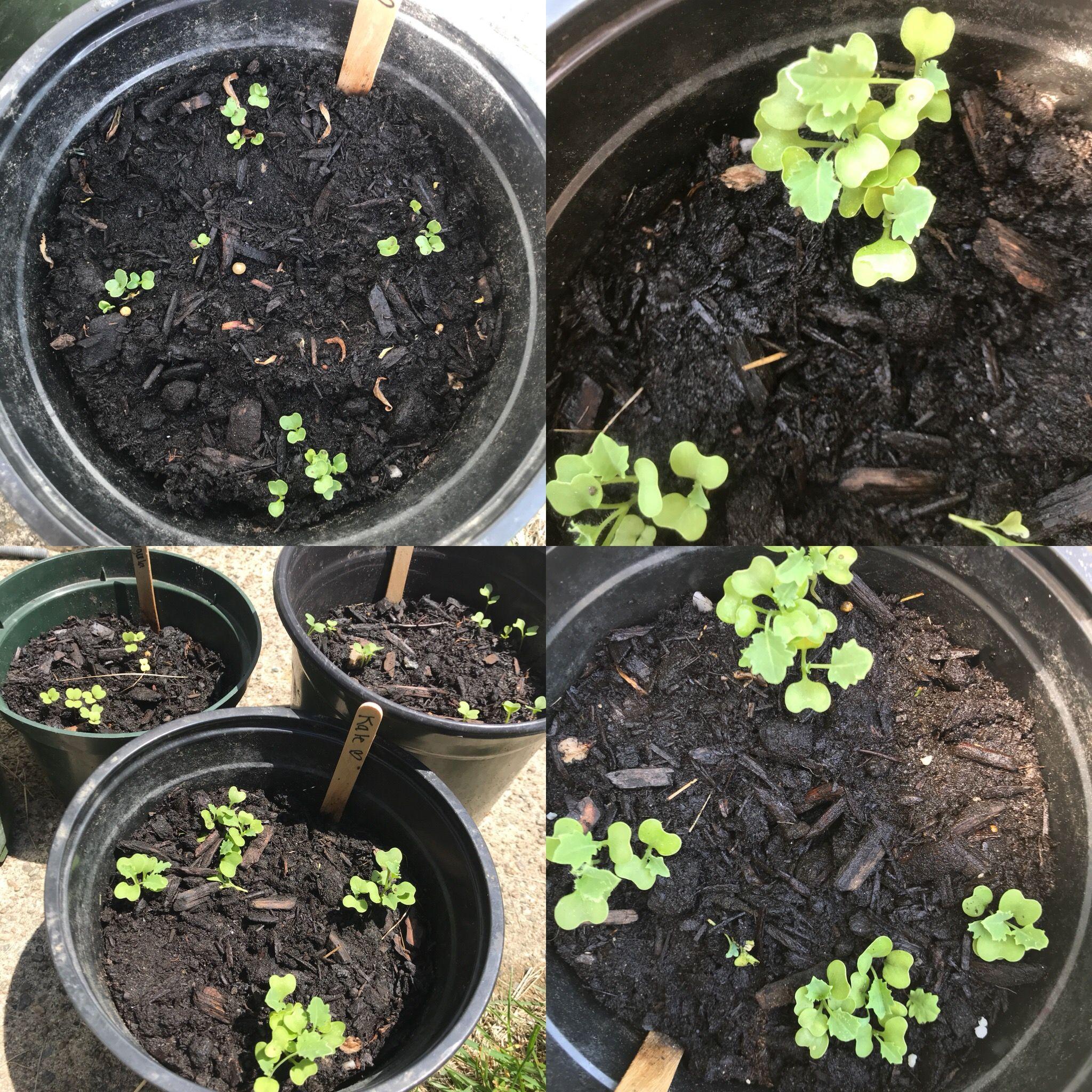 5 Vertical Vegetable Garden Ideas For Beginners: Pin By Jessica Mulveny On Beginner Vegetable Garden