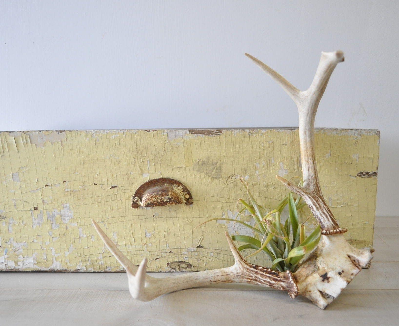 love using deer antlers in home decor. see more at MyraMelinda.etsy ...