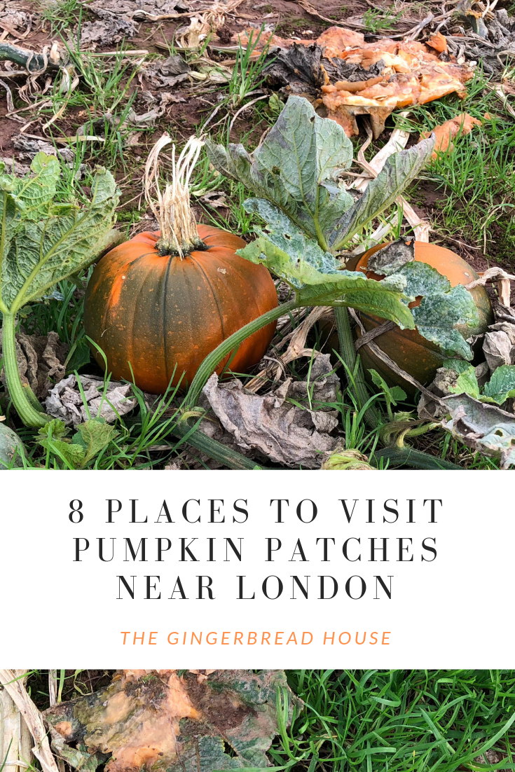 Where are the best places to pick pumpkins near London