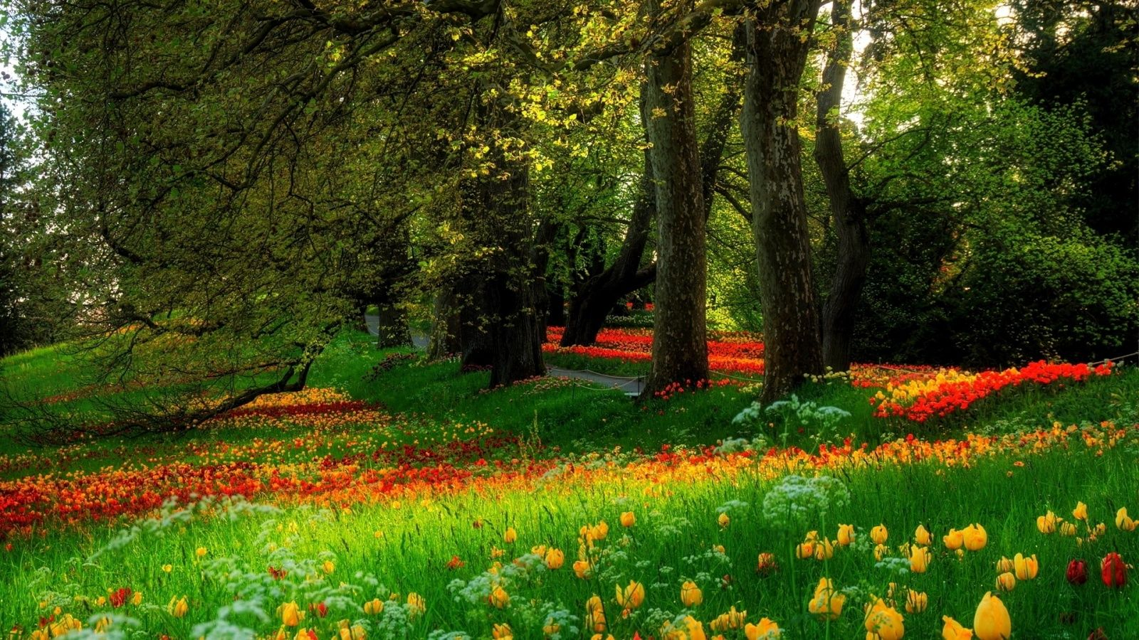 Flowers Wallpapers Hd 1600x900 8 Flowers Wallpapers Hd 1600x900