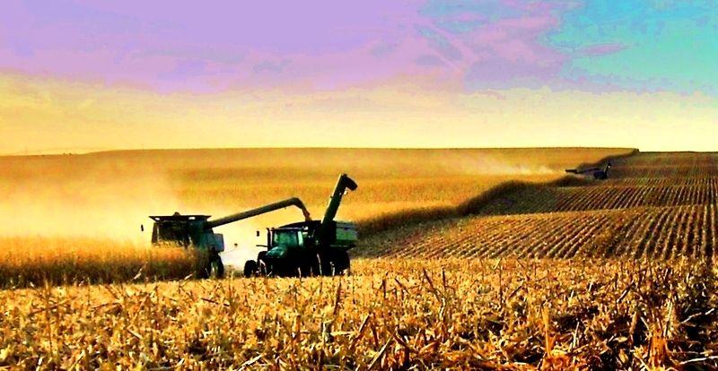 Corn harvest in nebraska photo galleries outdoor