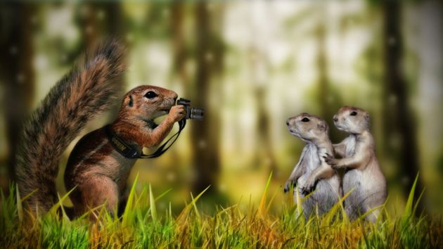 Awe Inspiring Animals Funny Creative Smile For The Camera Funny Download Free Architecture Designs Momecebritishbridgeorg