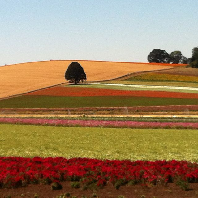 My Family's Flower Seed Farm In Oregon. Buy Our Seeds At