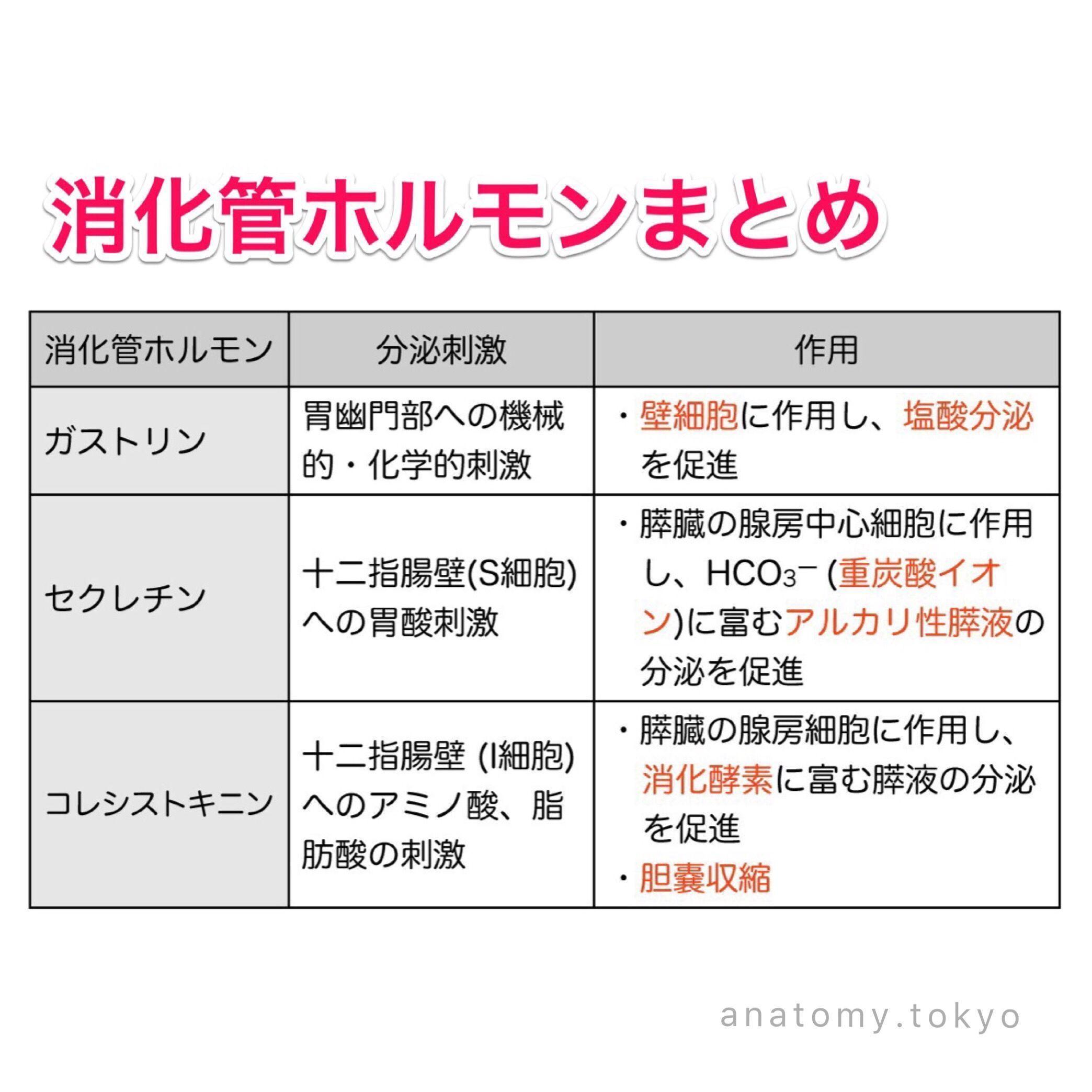 ボード Anatomy Tokyo のピン