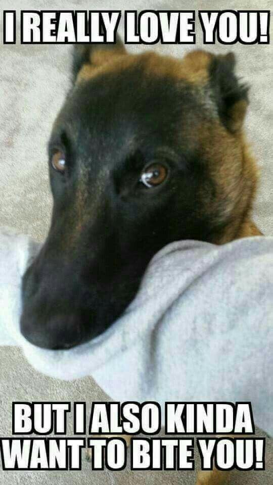 b5ea6db977be97bd684cf15f8c626147 lilly!! puppy love! pinterest german shepherds, german and dog