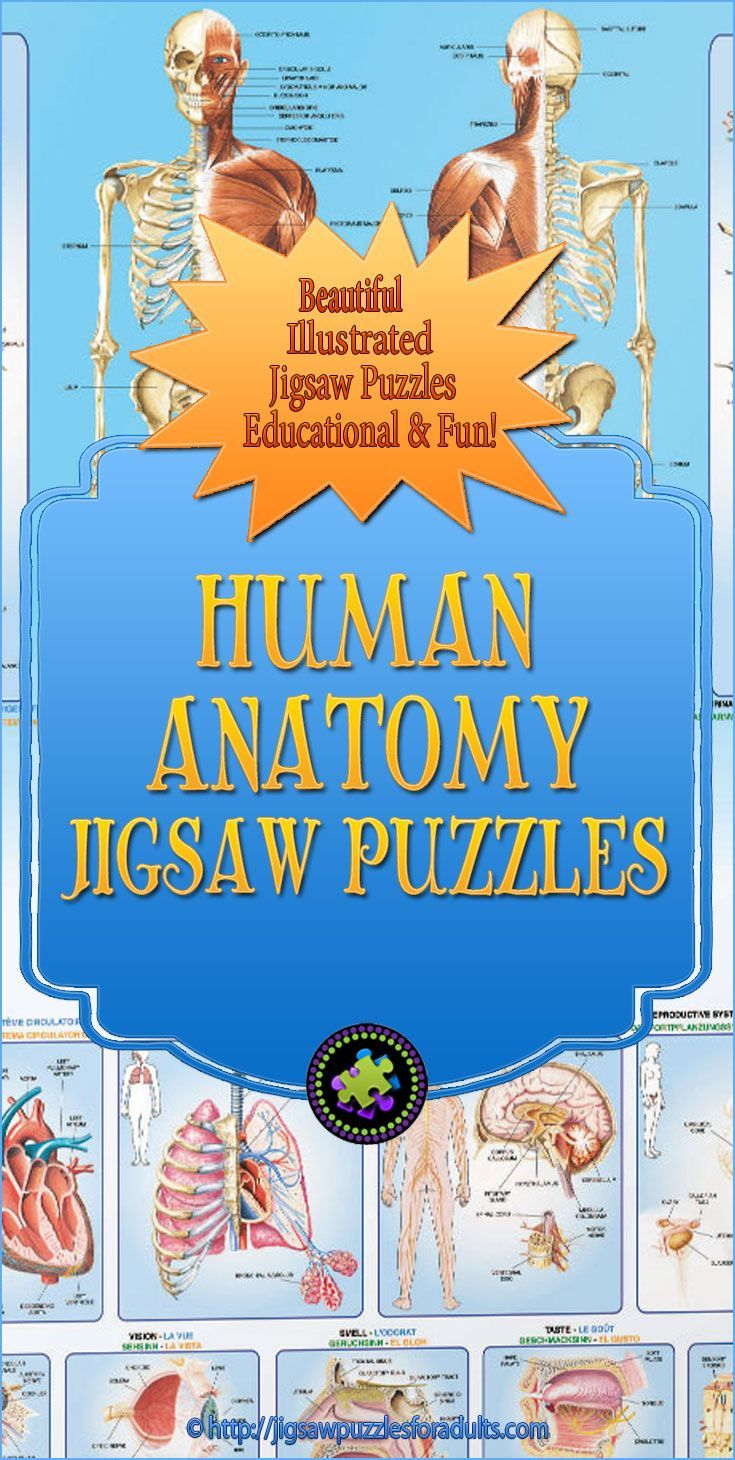 These Human Anatomy Puzzles are beautifully illustrated and labeled ...