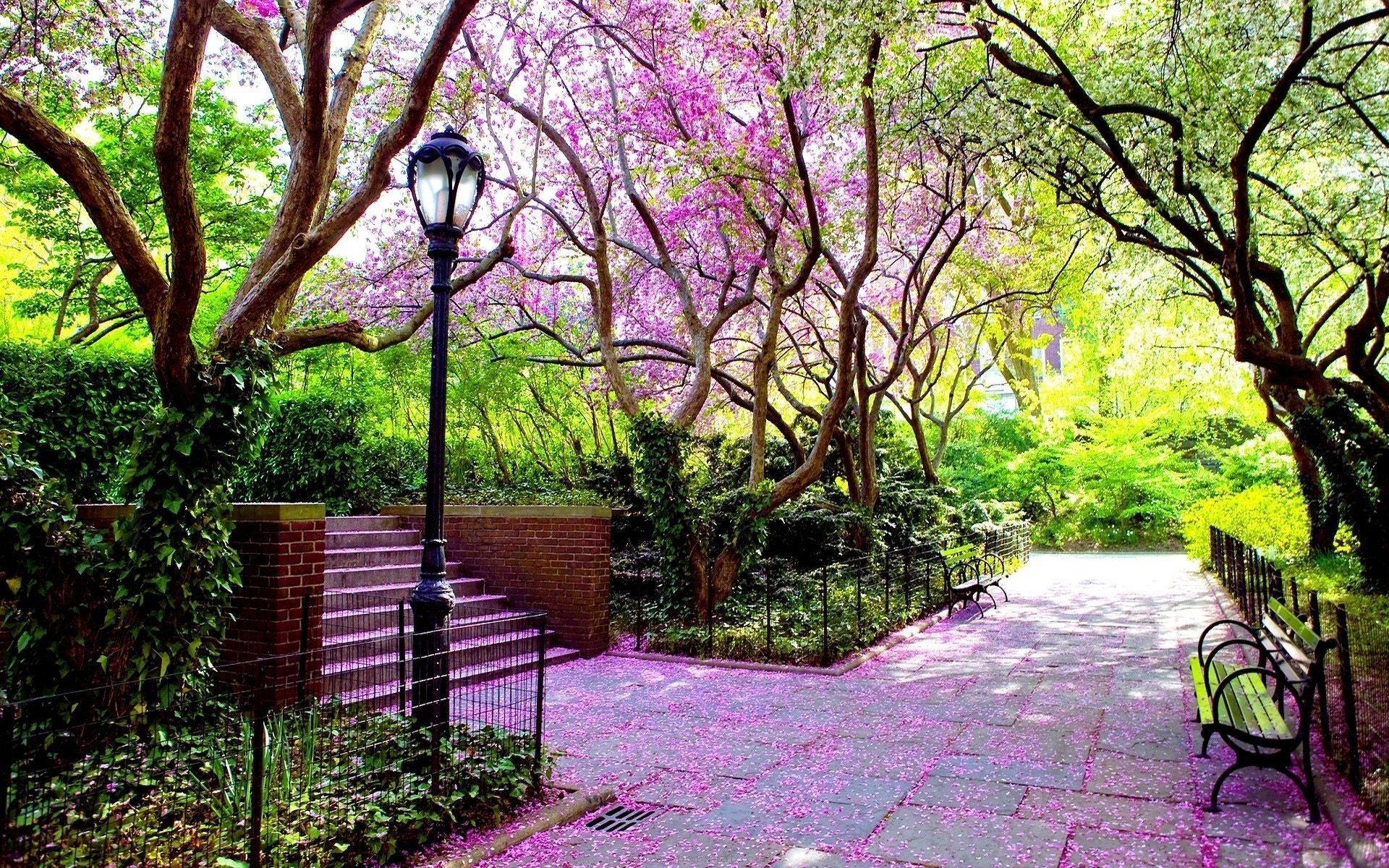 Hd wallpaper park - Flowers Park Tree Chairs Natural Hd Wallpaper
