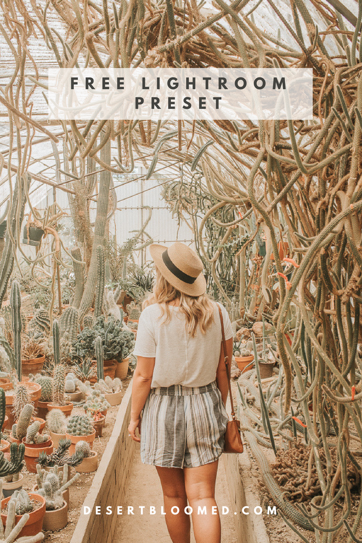 Free Lightroom Preset for bright and warm golden tones | Desert