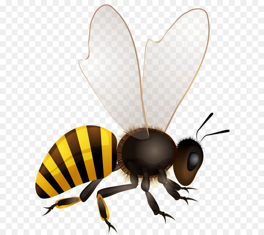 Honey Bee Vector Graphics Royalty Free Beehive Bee Png Download Bee Vector Graphics Honey Bee